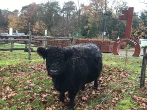Koe op het gras met sleutel natuurpoorten op achtergrond